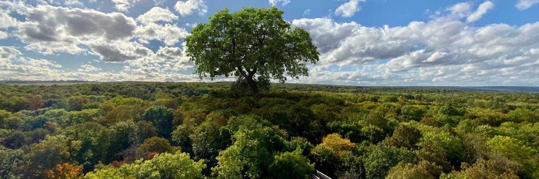 Canopé avec arbre géant
